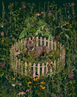 nature-9-dog